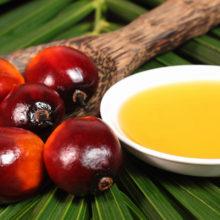 Белорусские ученые доказали вредность пальмового масла
