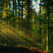 К выходным запрет на посещение лесов распространится на всю Гомельскую область