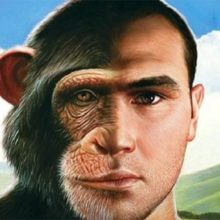 Кто и как скрещивал обезьяну с человеком