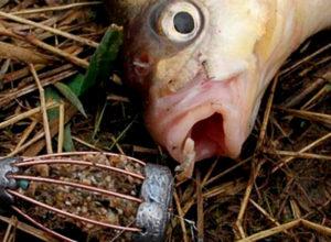 Прикормка для белой рыбы