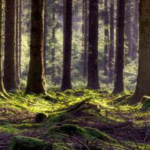 Двух заблудившихся женщин искали в лесах под Гомелем