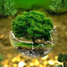 Гомельские ученые разработали прибор, диагностирующий здоровье деревьев