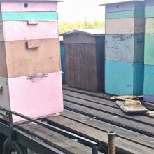 В Буда-Кошелевском районе похитили четыре улья с медом и пчелами