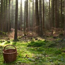 В Жлобинском районе ищут пропавшую в лесу пенсионерку