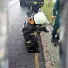 ВМинске спасатели достали утят изливневой канализации