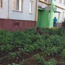 В Киеве вместо клумб горожане начали садить картошку