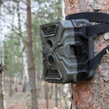 Фотоловушки зафиксировали около 120 нарушителей в лесах Гомельской области