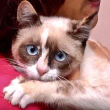 Как сложилась судьба кошек, которых пенсионер выбросил с 9 этажа в Мозыре