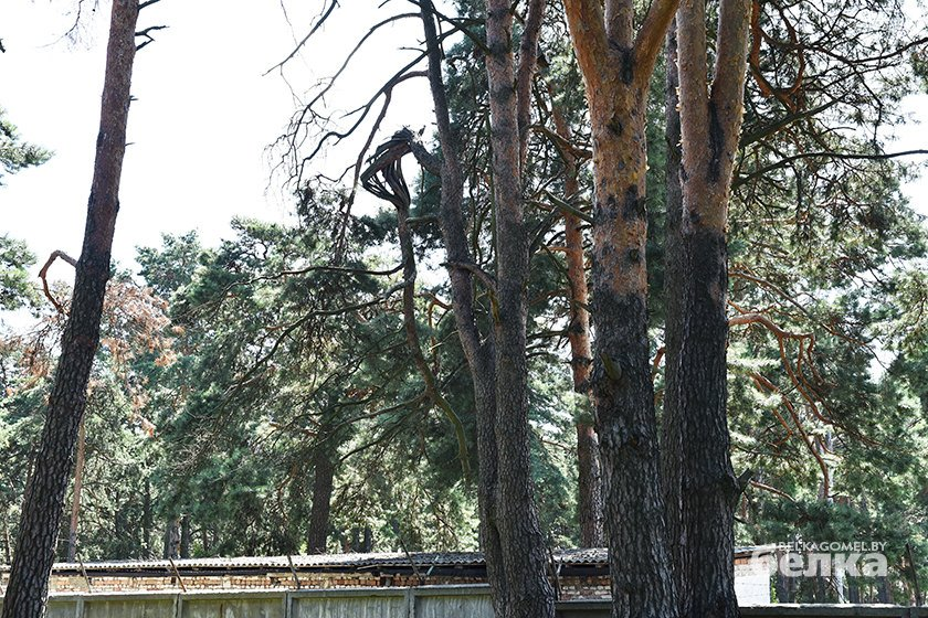 Лещинский лес