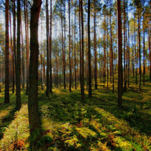 В Гомельском районе нашли пропавшего в лесу пенсионера