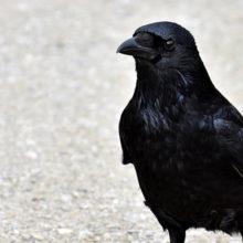 Видеофакт: вороны оккупировали детскую горку в Гомеле
