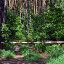 В Гомельской области введен запрет на посещение лесов