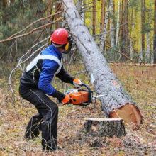 На Гомельщине при валке леса погиб 39-летний мужчина