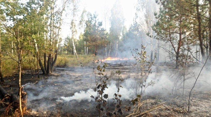 пожар в экосистеме