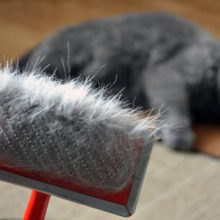 Почему кошки линяют, и что делать при итенсивном выпадении шерсти