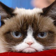Скучают ли кошки одни дома?