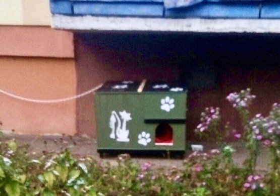 дом для бездомных животных