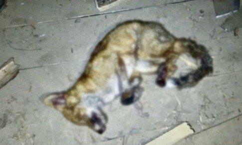 На Гомельщине лиса напала на частное подворье