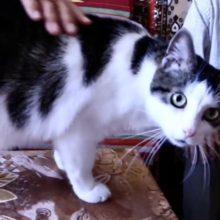 Светлогорцу, избившему пенсионера, который кормил котов, вынесли приговор