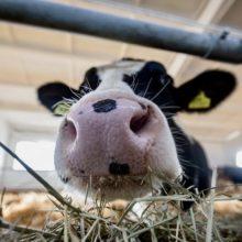 Новый молочно-товарный комплекс появился в Гомельской области