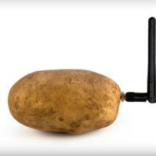 Представлена «умная» картошка, которая может общаться