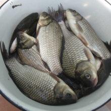 Рыбалка в Гомеле.  Рыболовные места