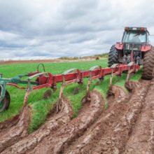 Свыше 3 тыс. га сельхозземель раскорчевали в Гомельской области в 2019 году