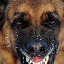 В Ельске собака сорвалась с цепи и покусала ребенка