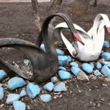 В Жлобине пьяный хулиган разбил витрину лебедем из покрышки