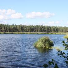 Какие запреты действуют в водоохранных зонах Гомельщины