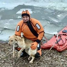 В Гомеле работники МЧС спасли провалившуюся под лед собаку