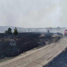 В Мозырском районе кто-то жег сухую траву, а в итоге сжег пять дач