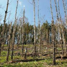 Махинации из-за премий с лесом в Рогачевском лесхозе