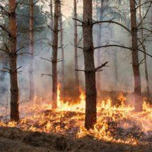 МЧС и Минлесхоз: с начала года в Беларуси потушено более 100 лесных пожаров