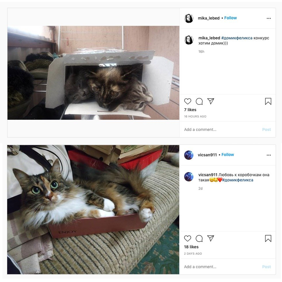 Посмотрите: в Беларуси появилась первая галерея котиков в коробках